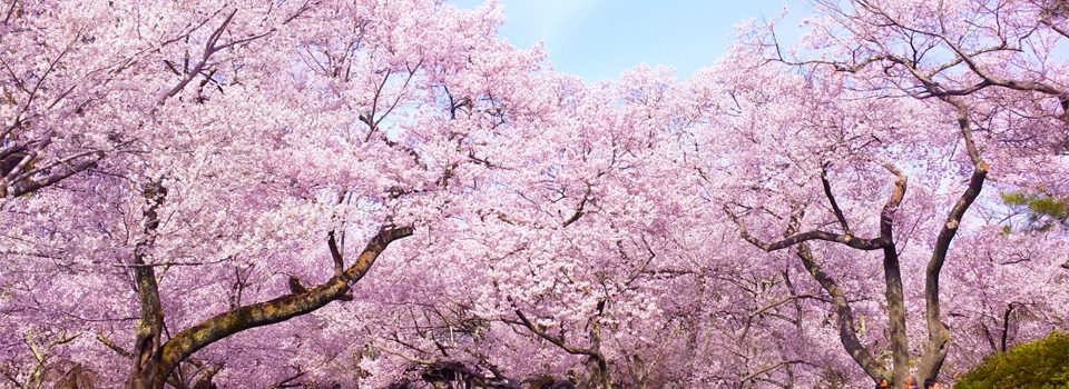 春のイメージ画像